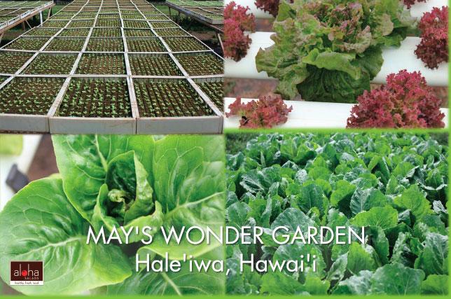 mays wonder garden